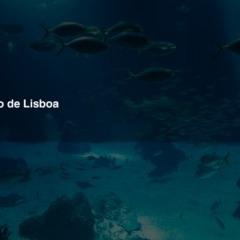 "Tipp: Lissabon ""Oceanário"""
