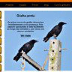 Tierbeobachtung: Vögel in Portugal